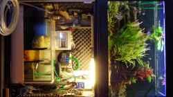 Technik im Aquarium Südamerika Gesellschaftsbecken 31372