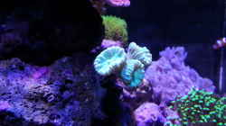 Pflanzen im Aquarium Meine Meerwasserpfütze