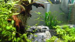 Aquarium Mein erstes Aquascape