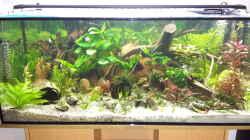 14.12.2015....neue Pflanzen zum Valentinstag für unsere Fische :-)
