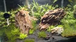 Aquarium Das Kleine (Nur noch als Beispiel)