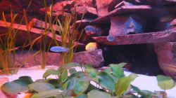 Aquarium Porphyr Rocks