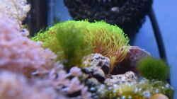 Besatz im Aquarium Blue Silence (aufgelöst)