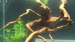 Dekoration im Aquarium My first little Nano (nur noch als Beispiel)