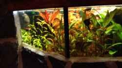 Aquarium Kleines Stück Südamerika