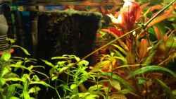 Pflanzen im Aquarium Kleines Stück Südamerika