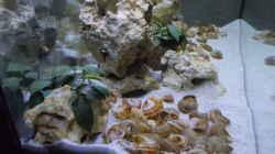 Dekoration im Aquarium Tanganjika Buddelzwerge