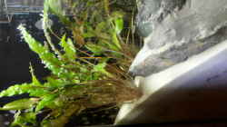 Aquarium Steinige Aussicht
