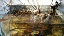 Aquarium 54 l Wurzelbiotop