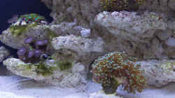 Neue Korallen 24.05.2015