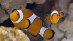 Einzug 11.04.2015 - `Nemo`