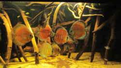 Aquarium Diskus Biotop