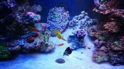 Aquarium BlueReef