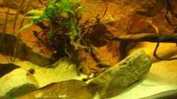 Besatz im Aquarium Becken 31552