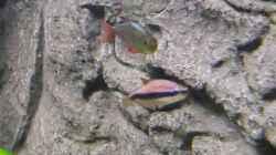2 Regenbogen Fische