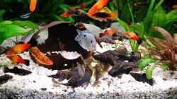 Aquarium Fluval Venezia 350 Eckaquarium