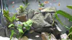 Dekoration im Aquarium Tomganjika