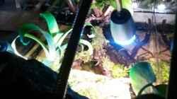 LED Klemmleuchte