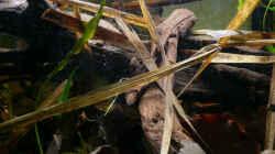 Dekoration im Aquarium Enigmatochromis II
