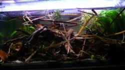 Aquarium Enigmatochromis II