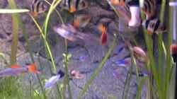 Besatz im Aquarium Aqua