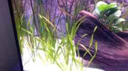 Pflanzen im Aquarium Aqua