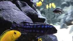 Besatz im Aquarium See der Sterne