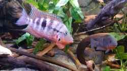 Aquarium Becken 31653