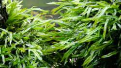 Pflanzen im Aquarium Easy Scaping (nur noch Beispiel)