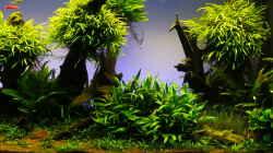 Aquarium Easy Scaping (nur noch Beispiel)