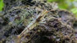 Besatz im Aquarium In den Dschungel - aufgelöst -