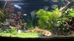 Aquarium Becken 31732