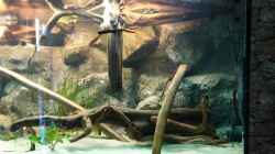 Dekoration im Aquarium Becken 31764