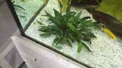 Pflanzen im Aquarium My American( nur noch Beispiel)