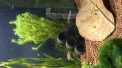 Besatz im Aquarium aquatlantis