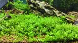 Pflanzen im Aquarium Life in Green