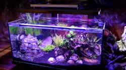 Aquarium Clear Structure