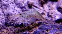 Besatz im Aquarium Clear Structure