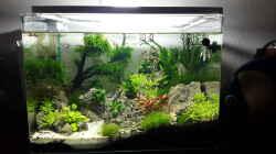 Aquarium Scapers Tank