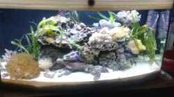 Aquarium Becken 31839