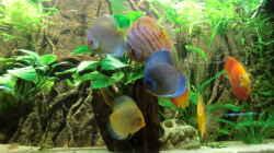 Besatz im Aquarium Wohnzimmeramazonas (Aufgelöst)