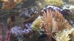 Aquarium Becken 31866