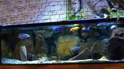 Aquarium Malawi Non Mbunas