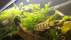 Aquarium Becken 31908