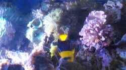 Aquarium Riffkanten cube