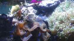 Besatz im Aquarium Riffkanten cube
