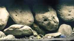 Aquarium Mdima mchenga