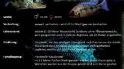 Besatz im Aquarium Mdima mchenga