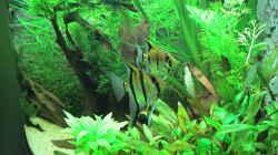 Aquarium Becken 31934