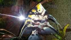 Besatz im Aquarium Dream